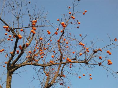 """""""看着高大的苹果树上结满了又大又红的苹果"""